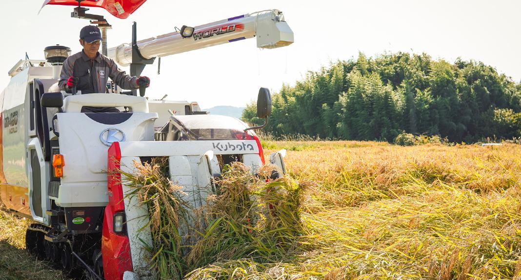自社栽培米